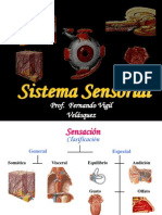 Sistema Sensorial-FVV.ppt