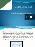 Ciclo de Krebs[1]