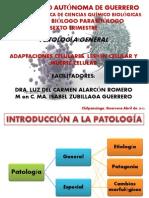Adapataciones Celulares, Lesion y Muerte Celular