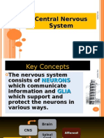 The Central Nervous System Physiology Lect 2