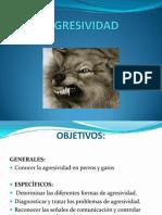 AGRESIVIDAD perros tm.pdf