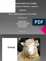 comp ovino.pdf