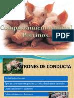 comp porcino.pdf
