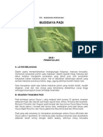 Bertanam Padi