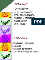 Funciones Del Hipotalamo