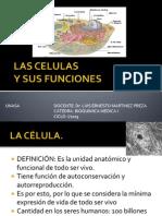 Las Celulas y Sus Funciones