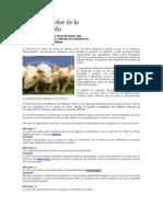 Mitos alrededor de la carne de cerdo.docx