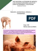 seleccionporcina-10101