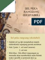 Sel Peka Rangsang (Eksitabel)