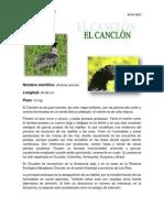EL CANCLON.docx