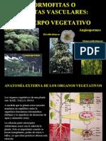 organos_vegetativos.ppt
