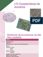 IAUnidad IV Características de los protozoarios
