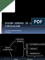 14 Visión general de la circulación Dra Antezana.ppt