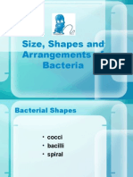 Shapes and Arrangements of Bacteria