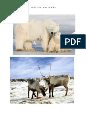 Animale De La Polul Nord
