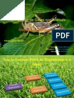 Intercâmbio de gases nos animais
