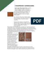 Caraterísticas da madeira do Guanandi