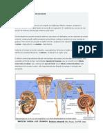 Fisiologia Do Sistema Regulador