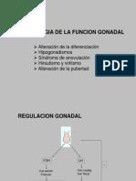fisiopatologia-gonadal