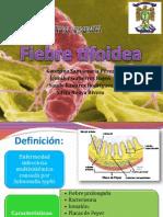 Fiebre Tifoidea