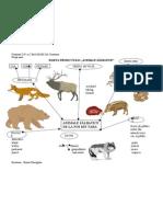 Harta Proiectului Animale Salbatice de La Noi Din Tara
