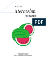 Comercial Water Melon Production