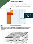 2membranaplasmatica-111208104950-phpapp02