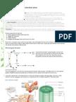 Transport in Multicellular Plants