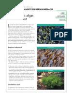 Algas en Cosmetica