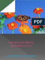 Mariposas-4569
