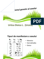 Determinismul Genetic Al Sexelor - Urtica Dioica