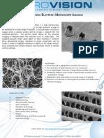 Scanning Electron Microscopy (SEM) Imaging