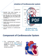 Functional Organization of Cardiovascular System