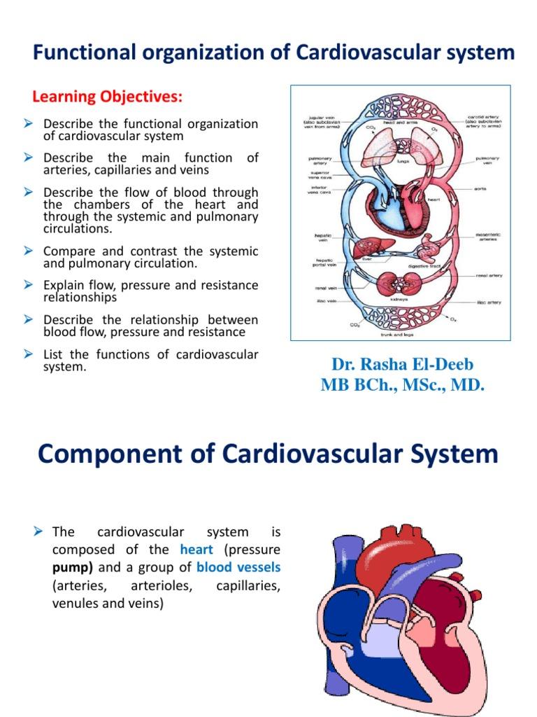 Functional Organization Of Cardiovascular System Heart Valve