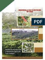 Desarrollo de Plantacion de Cafe