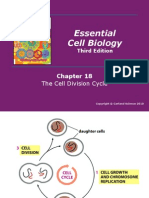 Lecture20 21Cell Cycle Apoptosis