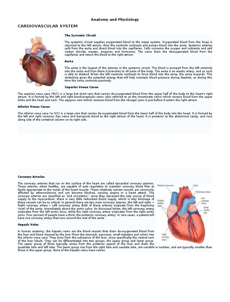 Anatomy and Physiology (2) | Coronary Circulation | Circulatory System