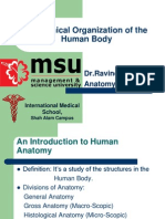 Anatomical Organization of the Body for Lecture