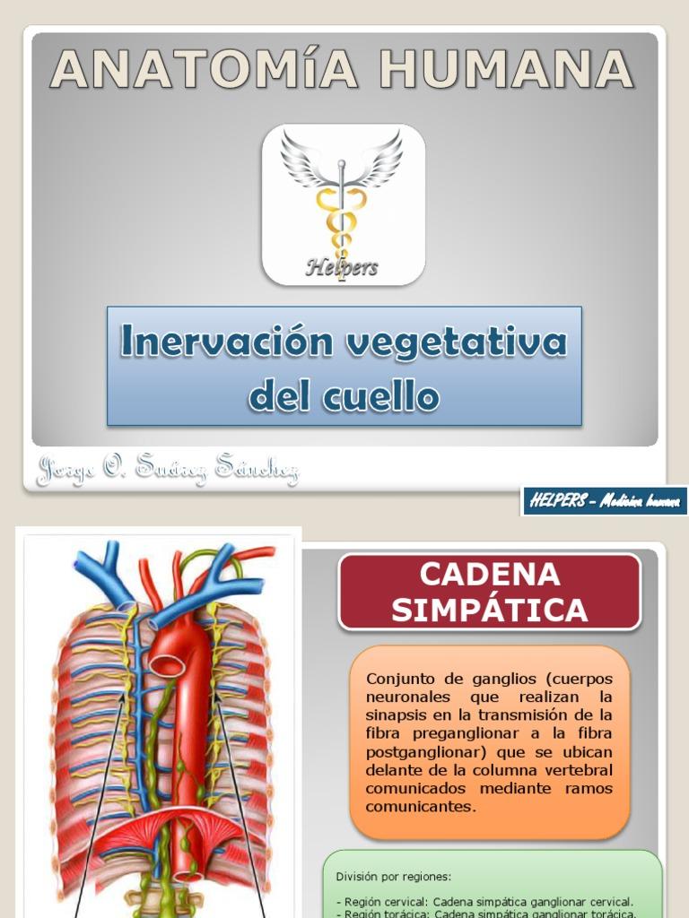 Inervación vegetativa del cuello
