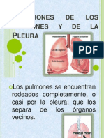 Relaciones de Los Pulmones y de La Pleura