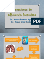 Mecanismos de Adherencia Bacteriana