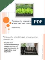 Producción de Plántulas de Hortalizas en Bandejas