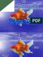 Label Ikan