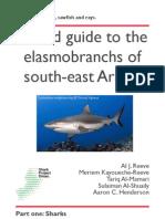 English sharks web.pdf