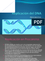 6-ReplicaciondelDNA2Procariotas