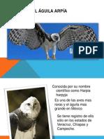 El Águila Arpía.pptx