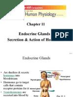 201 Endocrine 1