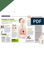 Comment ça marche… l'appareil respiratoire