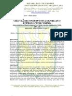 Cirugía Reconstructiva de órgano reproductor canino
