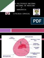 Citologia Cervical.